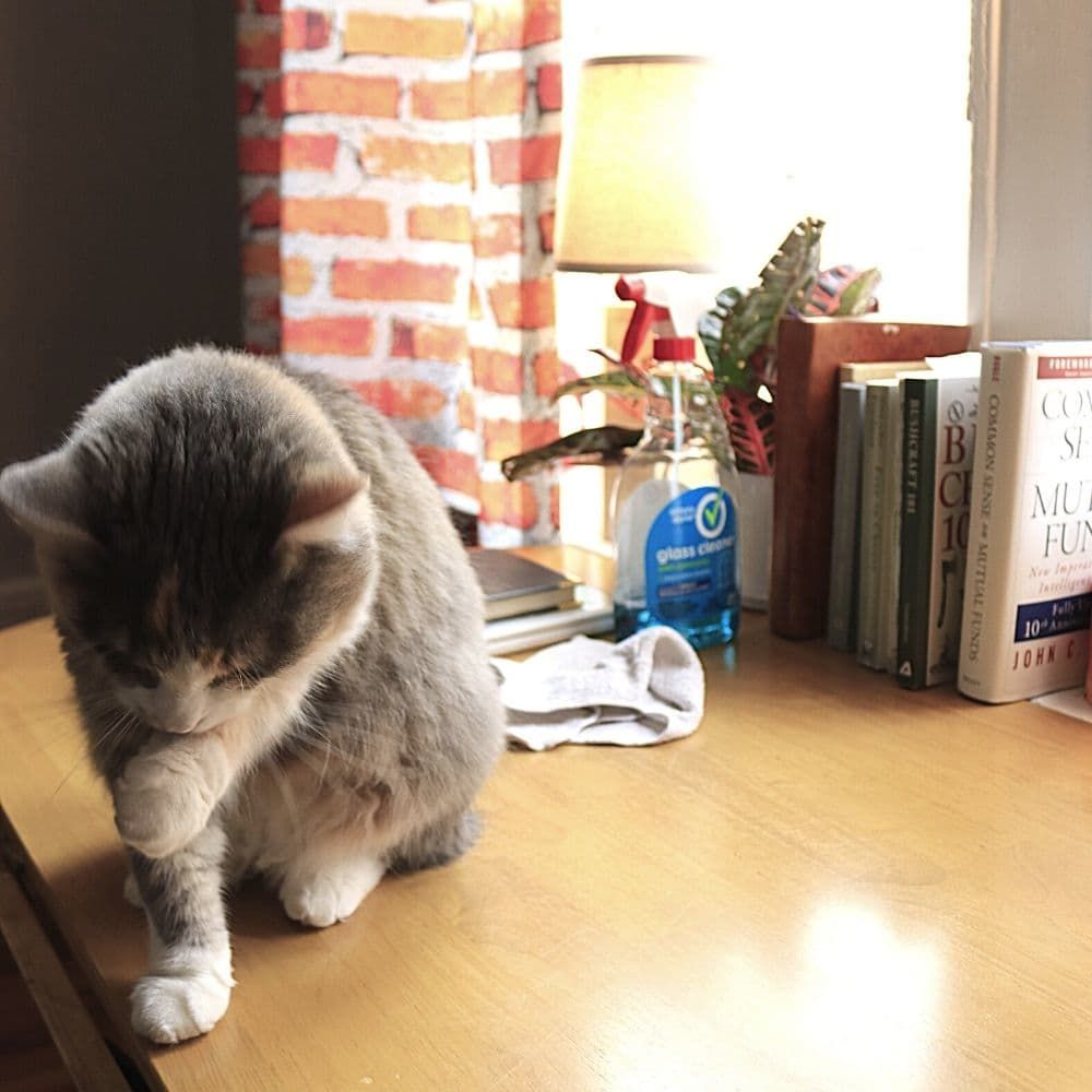 Clean tidy desk space with kitten