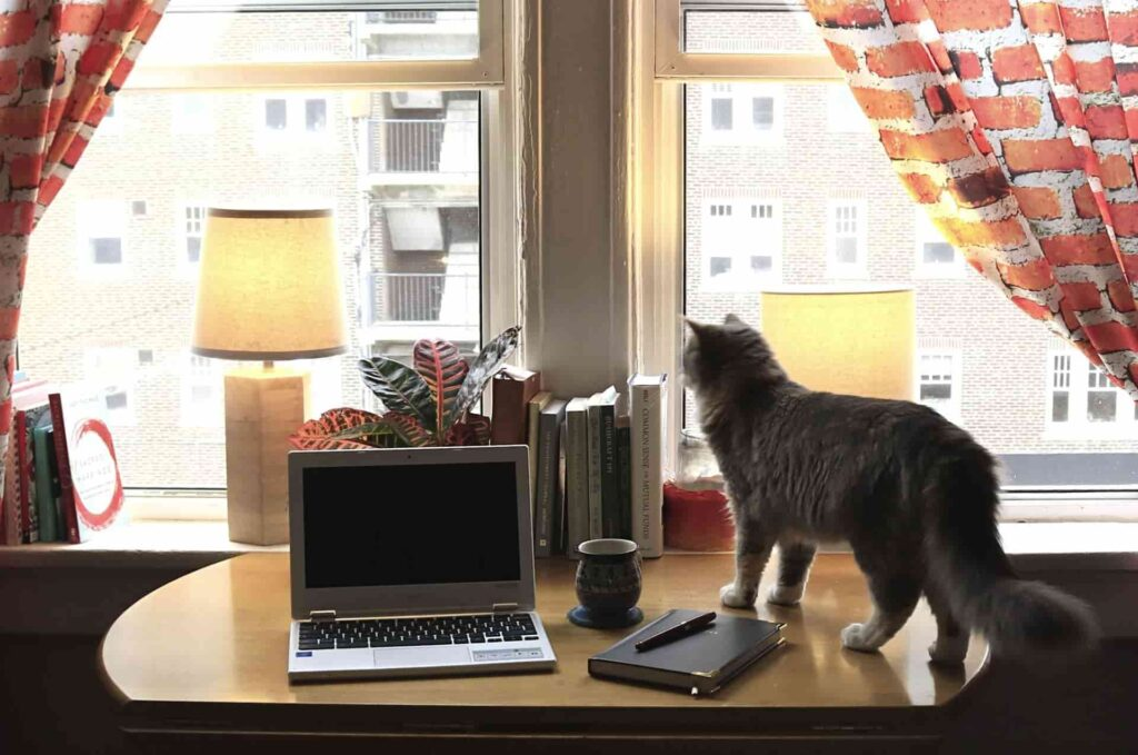 Working from home desk space bright window curtains and cat